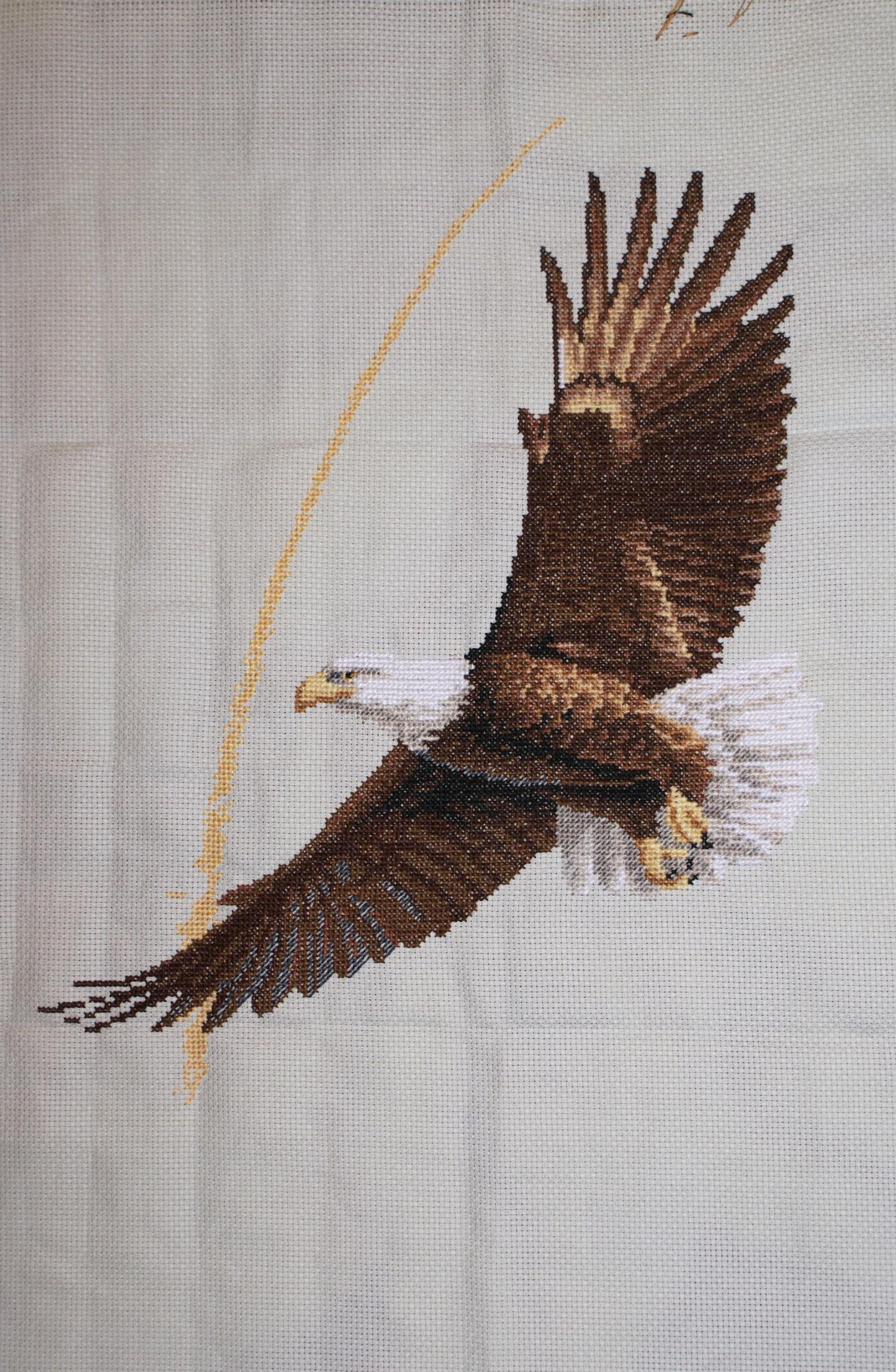 Bald eagle crayolacomau bald eagle head pattern
