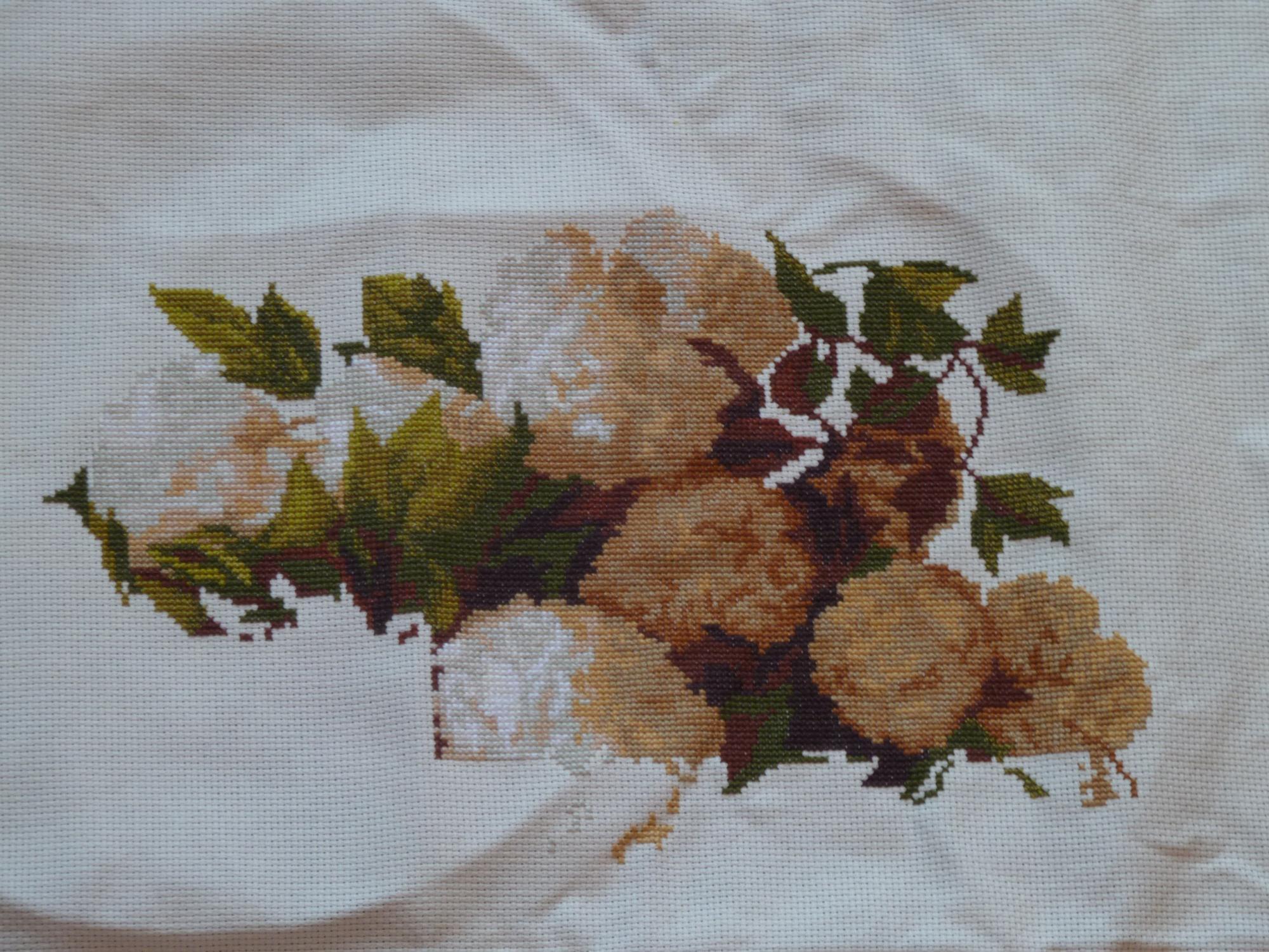 Выращивание хризантем под черной пленкой 60