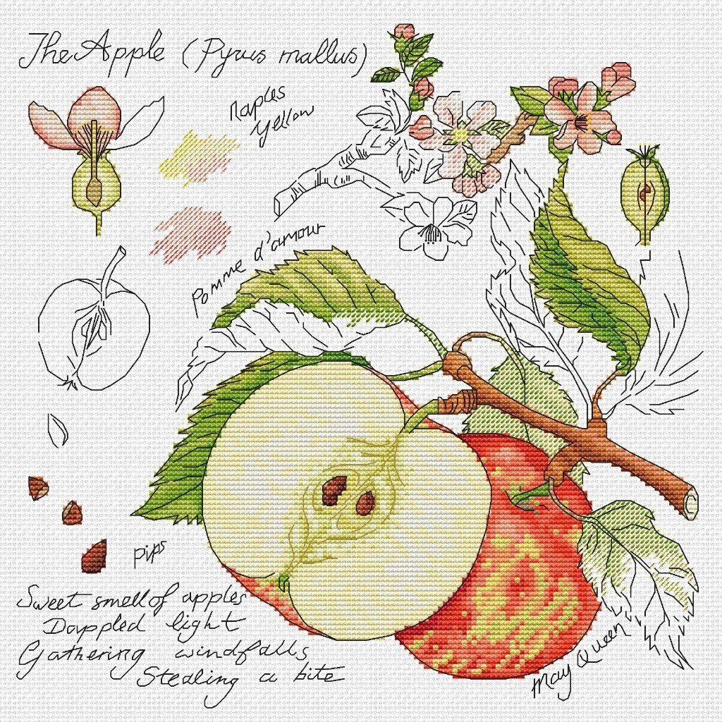 Вышивка схема яблок 11